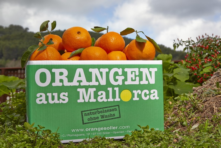 Unsere beliebte Orangenkiste - auch als Mischkiste und im Abo erhältlich!